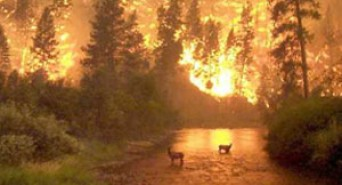 How to Prevent a Forest Fire
